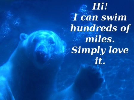 450-polar-bear-swim.jpg